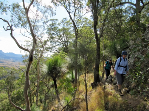 Mt Mattheson Track - Main Range National Park