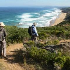 Best of the Great Ocean Walk